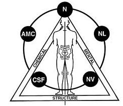Kinesiologia Osteopatica